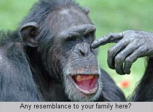 chimp in your family?